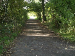 The edge of the path may be less well defined in the shade of the woodland.