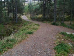 The gentle ramp off the bridge leads to a wide forest road.