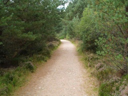 The conifer trees sometimes over hang the edge of the path.