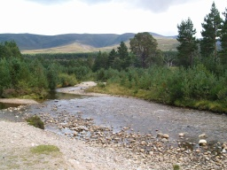 The path gives attractive views of the river, Glenmore Forest and the hills beyond.