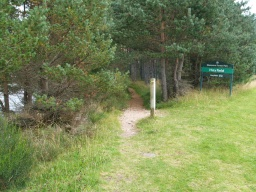Take the trail to the left into the trees. The surface is a little uneven to begin with. The path is generally narrower from here back to the car park and two people may not be able to walk side by side. Also the surface is not quite as firm and even.