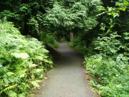 There are various places where vegetation overhangs the path or encroaches from the side.