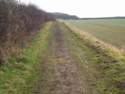 The surface of this working track may be muddy at times. It is used by horse riders.