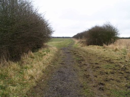 Carry straight on as the path switches which side of the hedge it follows.
