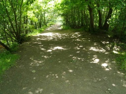 The first half of the walk has a wide path with ample room to pass other users.