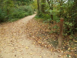 In the woodland there may be leaves covering the path which may be slippery when wet.