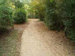 Leaves may obscure the edges of the path especially in autumn