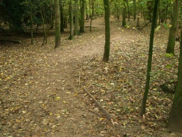 The surface of the path is crushed stone that is well compacted and provides a firm and even surface. The path may be indistinct under the shade of the trees and with leaves covering it surface.