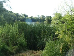 The reed beds and open water of the lakes are teaming with wildlife