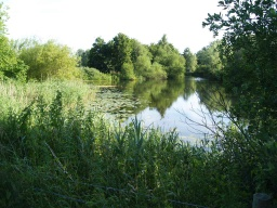 The reed beds, lily pads and open water provide varied habitats for wildlife