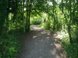 Light and shade are a feature as the path passes through many woodland areas