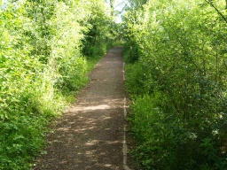 Though edged by bushes the path has openings from which the lakes can be seen