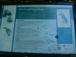 An Information Panel gives more information about kingfishers