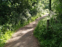 The path may narrow for short distances because of encroaching vegetation