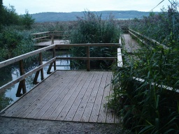 Some boards walks provide close views of the reed bed environment.