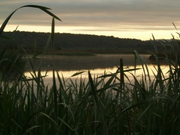 The hide provides excellent bird watching across the reed beds of Leighton Moss.