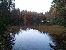The loch mirrors the trees to give interesting views.