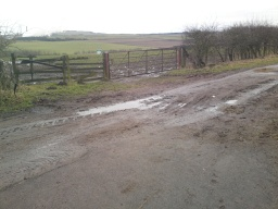 The track to the  right (west) at the bottom of the Drum Road can be a bit muddy after long periods of rain.  This is a working farm track.