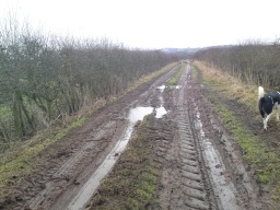 The mud is rutted by tractor use.