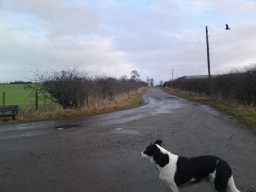 There is a seat on  the corner at the bottom of the Drum Road.  The tarmac road continues towards Westerton Farm