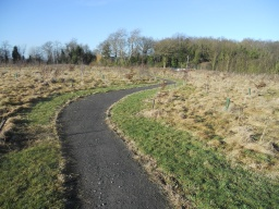 The path meanders through the recently planted woodland.