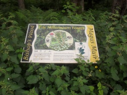 The Information Board surrounded by nettles