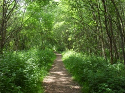 The overgrowth of vegetation narrows the path although still within standard