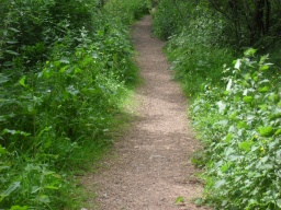 The vegetation narrows the path.