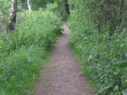 The path narrows to 740mm due to the overgrowth of vegetation