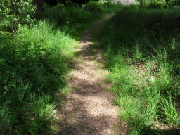 The path starts to narrow and grass is growing through the path