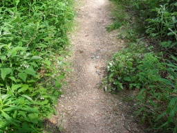 The path is narrowed by overgrown vegetation