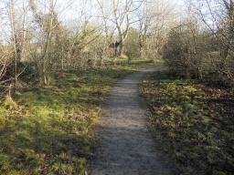 The path cuts through developing broadleaved woodland.