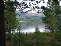 Views are available across Loch Morlich