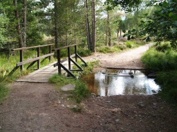 The bridge has large (25-50mm) holes between its boards and tree roots stick up 50mm into the path on the far side.