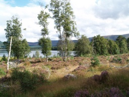 Views of the loch are also available