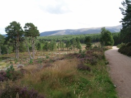 The track offers a wide, level and attractive route along the back of the loch.