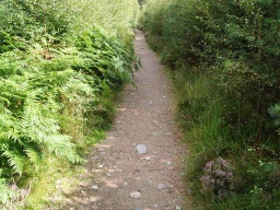 The path surface becomes more stable but the vegetation make it a lot narrower so that two people may not be able to walk side by side along this section.