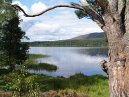 Views of the loch are still to be seen.