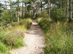 Vegetation occasionally encroaches to narrow the path
