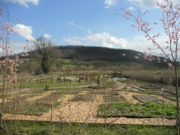View of the Craven Arms Community Garden. Access to the site is good, with a through-route back on to the main trail.