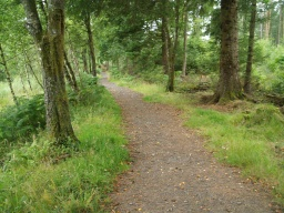 The walk passes through mixed deciduous and conifer woodland.