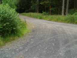 The walk shares the forest track for a short distance with cyclists, horse riders and some vehicles.