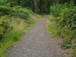 The path winds gentle through the conifer woodland