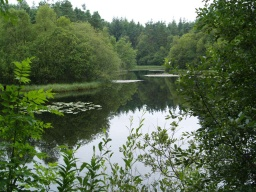 On a still day the pond mirrors the woodland.