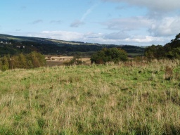 At the higher parts of the walk there are good views across the valley towards Kilsyth.