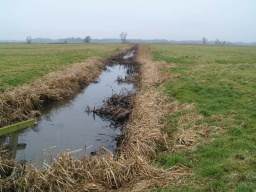 The main drainage dykes of the area may be a good place to spot birds and other wildlife.