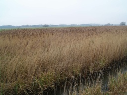 Reed beds and open fen make this an interesting area for wildlife.