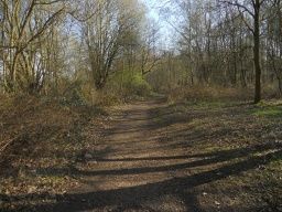 The path meanders naturally through this part of the woodland.