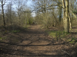 The path widens considerably on the main trail.
