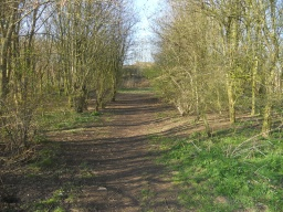 Enter a small copse to regain the main path.